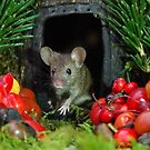wild  house mouse by Simon-dell