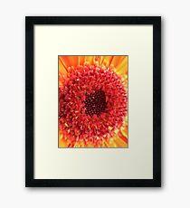 Red & Yellow Gerbera Framed Print