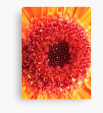 Red & Yellow Gerbera Canvas Print