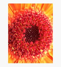 Red & Yellow Gerbera Photographic Print