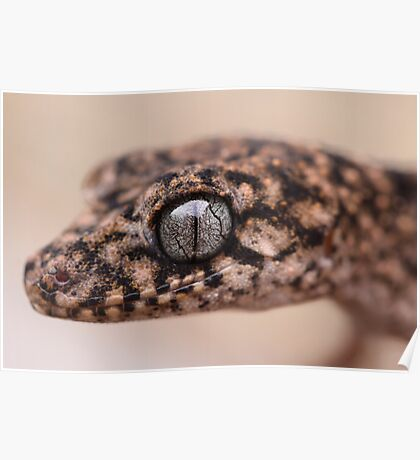 Granite Thick Tailed Gecko Poster