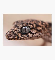 Granite Thick Tailed Gecko Photographic Print