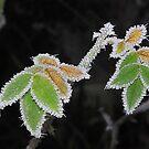 Pretty....cold by relayer51