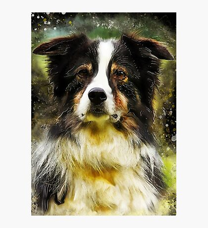 Border Collie dog #dog #collie Photographic Print
