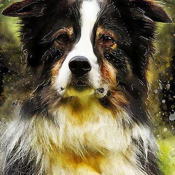 Border Collie dog #dog #collie by JBJart