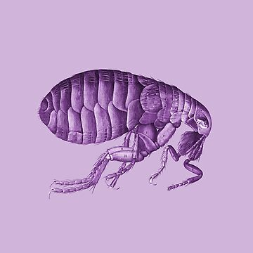 Purple Flea Tee by adrienne75