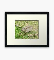 Local wildlife Framed Print