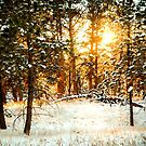 Winter Forest Sunset by Danny Key