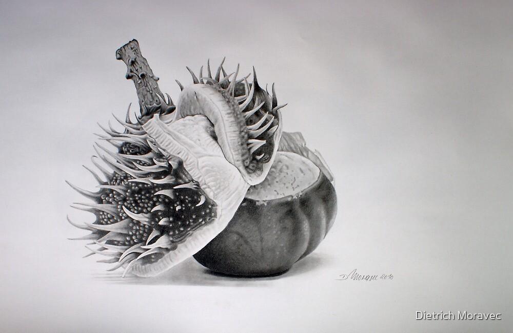 Birth of a chestnut by Dietrich Moravec