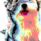 süsser Hund, Havaneser, Bolonka, Malteser, Hündin,  von rhnaturestyles
