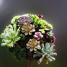 Succulent Bouquet by kittyrodehorst