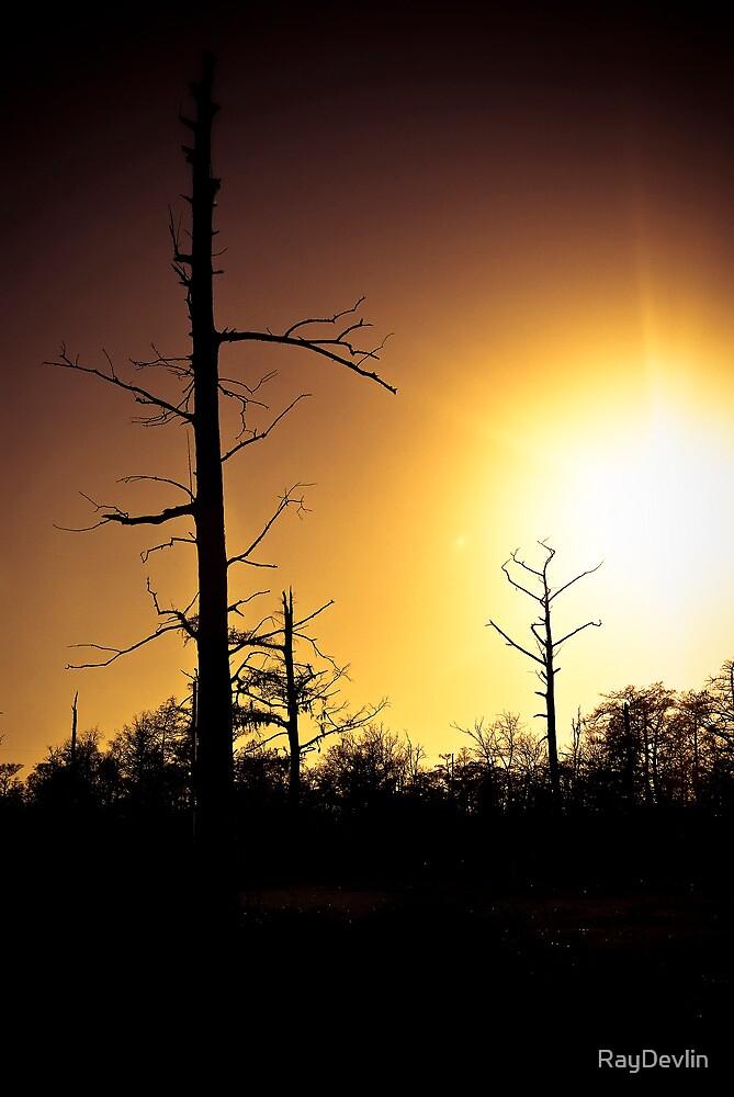 Cypress Sunset by RayDevlin