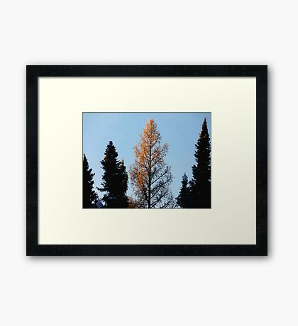 Catching The Morning Rays Framed Print