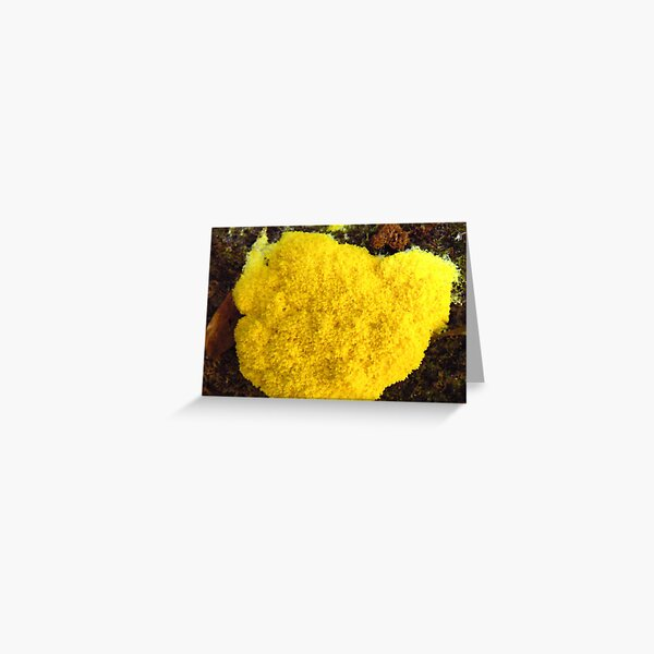 Yellow Slime Mould Greeting Card