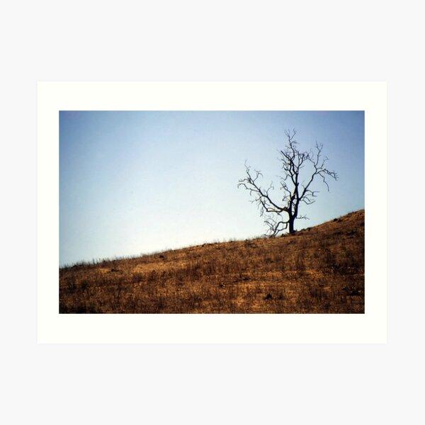 Desolation Art Print