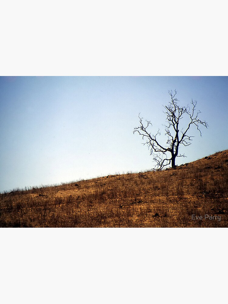 Desolation by AdamsWife