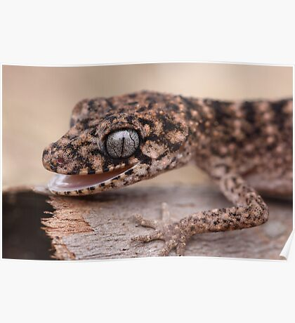 Granite Thick Tailed Gecko 2 Poster