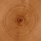 Tree rings by mavisshelton