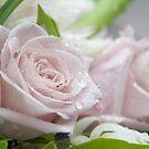 Pretty in Pink by Catherine Davis