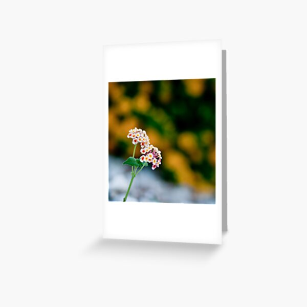 Lone Greeting Card
