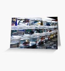 Colorful Selection Greeting Card