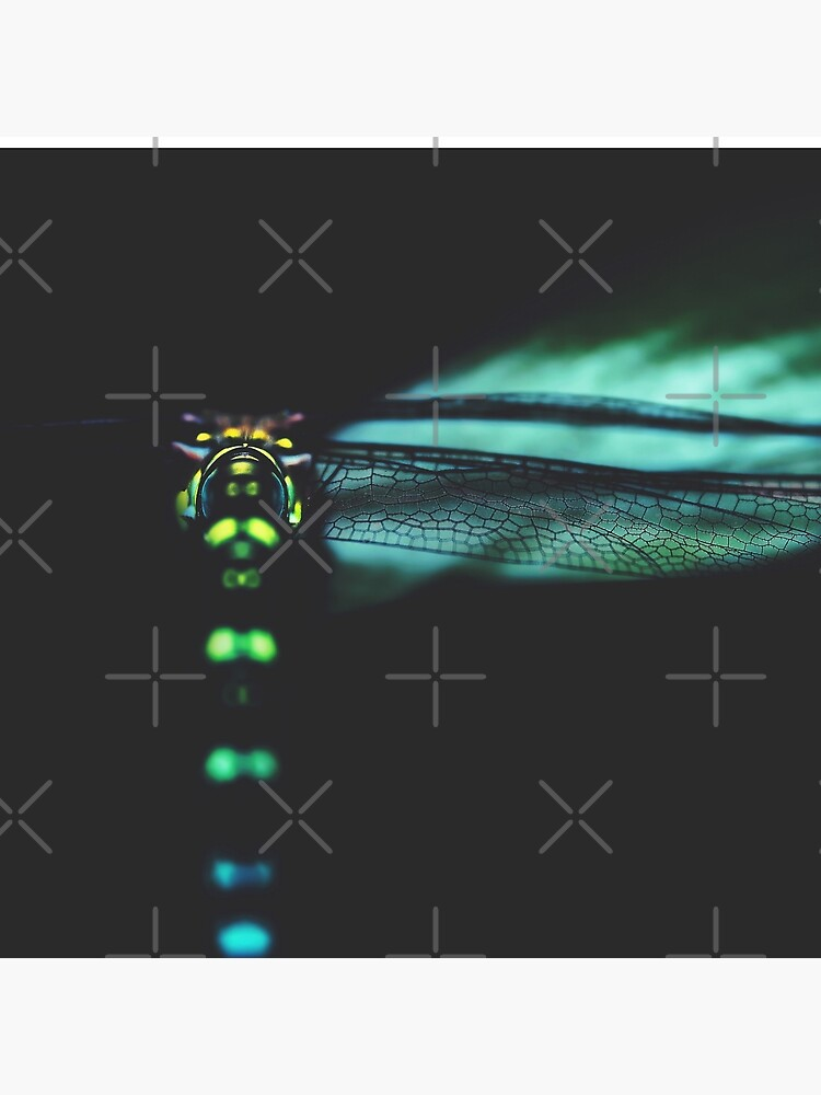 dragonfly by Ingz