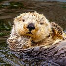 Otterly Cute by Dave  Knowles