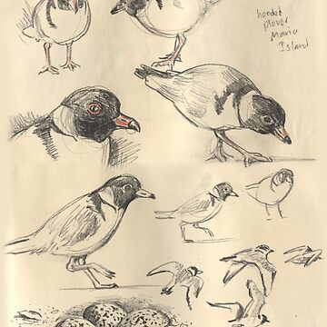 Hooded Plovers by SnakeArtist
