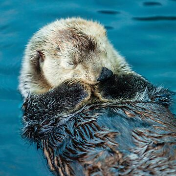 Otterly Bliss by Dalyn