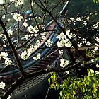Taiwan, Temple, Sakura by Digby