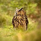 Eagle Owl by Dave Hare