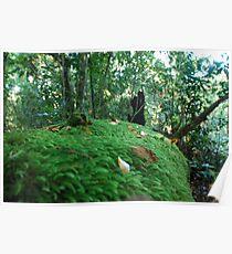 Rainforest Undergrowth Poster