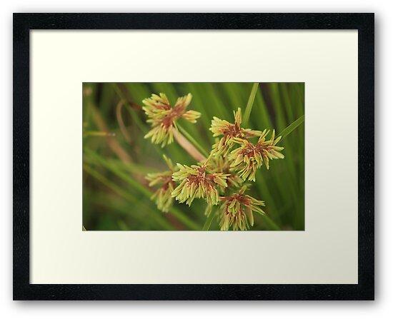 Wild Grass by reflector