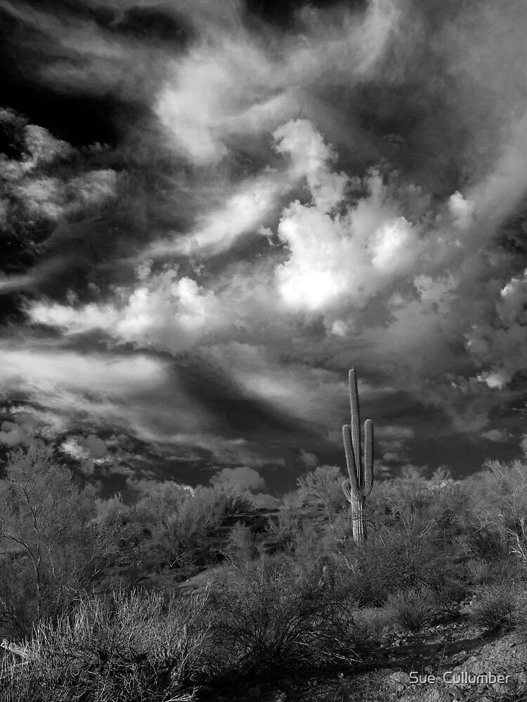 Desert Beauty by Sue  Cullumber