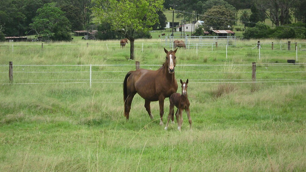 A Mare and Her Foal on a Rural Property. by Mywildscapepics