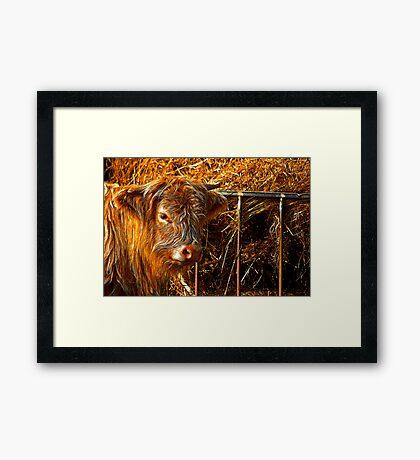 Highland Cow #1 Framed Print