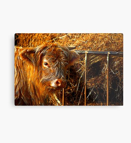 Highland Cow #1 Metal Print