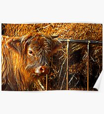 Highland Cow #1 Poster