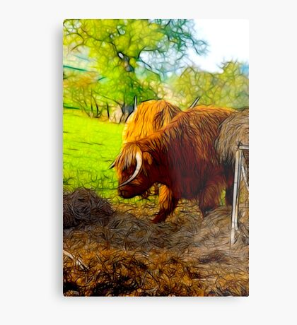 Highland Cattle #2 Metal Print