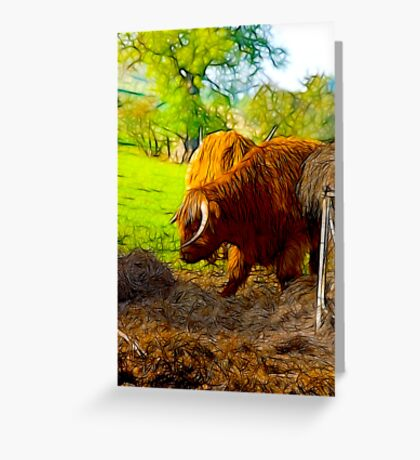 Highland Cattle #2 Greeting Card