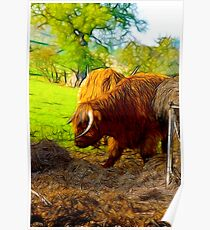 Highland Cattle #2 Poster