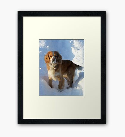 paws in the snow Framed Print