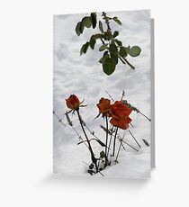Roses and Lavender Greeting Card