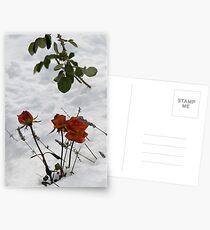 Roses and Lavender Postcards