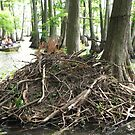 Pile of Sticks? by amyklein196203