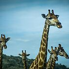Group Of Giraffe by vrphotographysa