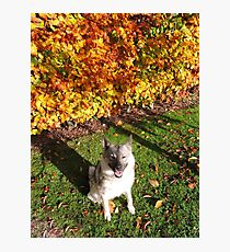 Happy Autumn Elkhound Photographic Print