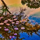 Reflections of the Lily Pond by Cathy Jones