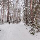 Happy New Year! by Svetlana Korneliuk