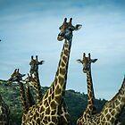 Giraffe-Gruppe von vrphotographysa